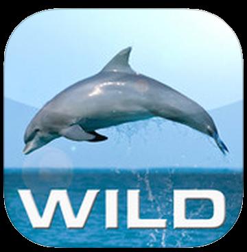 Wild_Dolphins-1